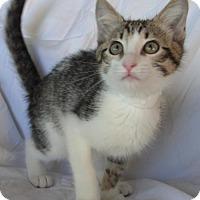 Adopt A Pet :: Cokie - Antioch, CA