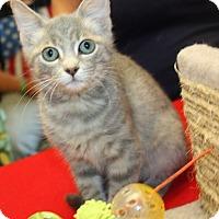 Adopt A Pet :: Su-Su - Cottageville, WV
