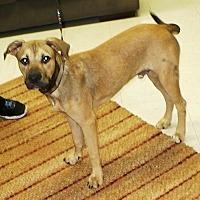 Adopt A Pet :: Lester - Eastpoint, FL