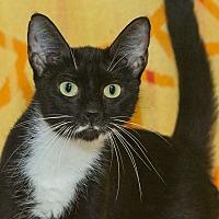 Adopt A Pet :: Nala - Elmwood Park, NJ