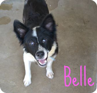 Border Collie Mix Dog for adoption in Beaumont, Texas - Belle