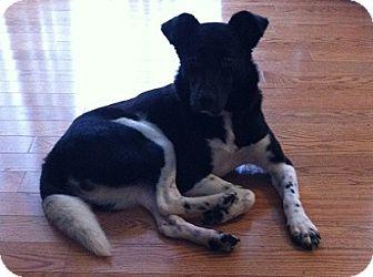 Border Collie Mix Dog for adoption in Hamilton, Ontario - Lexie