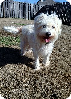 Cairn Terrier Mix Dog for adoption in Baton Rouge, Louisiana - Aubrie