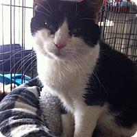 Adopt A Pet :: Tenille - Orillia, ON