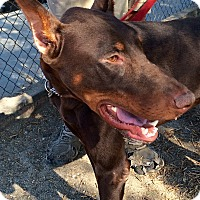 Adopt A Pet :: Happy - Sun Valley, CA