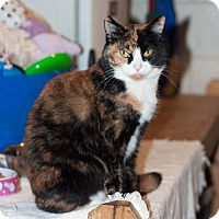 Adopt A Pet :: Carrie - New Martinsville, WV