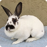 Adopt A Pet :: Joy - Bonita, CA