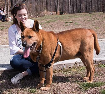 Akita Mix Dog for adoption in Midlothian, Virginia - Akagi