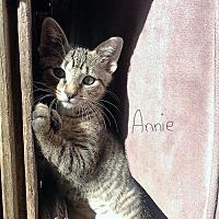 Adopt A Pet :: Annie - Princeton, MN