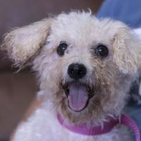 Adopt A Pet :: Maggie - Colorado Springs, CO