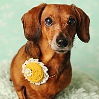 Adopt A Pet :: Breslin - Nashville, TN