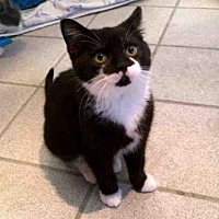 Adopt A Pet :: OREO - Canfield, OH