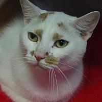 Adopt A Pet :: Captain - Nashville, IN