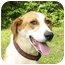 Photo 1 - Foxhound/Collie Mix Dog for adoption in Mocksville, North Carolina - Lucas
