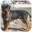 Photo 4 - Rottweiler Mix Dog for adoption in Austin, Minnesota - Cortez