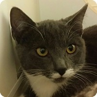 Adopt A Pet :: Ginko - San Fernando Valley, CA