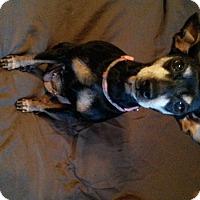 Adopt A Pet :: Roxy - Richmond, VA