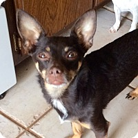 Adopt A Pet :: Mija - Edmond, OK