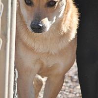 Adopt A Pet :: Seminole - Video! - Mahwah, NJ