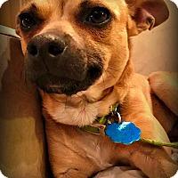Adopt A Pet :: Tango - Tijeras, NM
