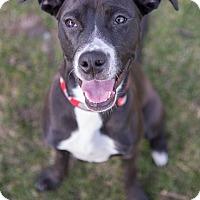 Adopt A Pet :: Sansa - Drumbo, ON