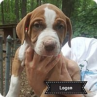 Adopt A Pet :: Logan - Boston, MA