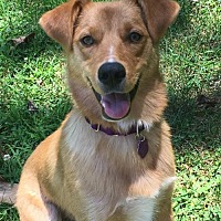 Adopt A Pet :: Cassidy - see also Lexi - Baltimore, MD