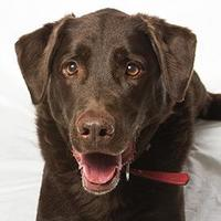 Adopt A Pet :: Kallie - Blackstock, ON