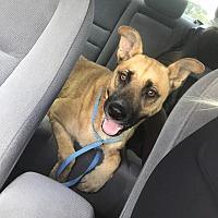 Adopt A Pet :: Perla - Harrisville, RI