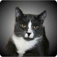 Adopt A Pet :: Edward - Montgomery, IL