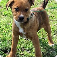 Adopt A Pet :: Addison - Staunton, VA