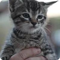 Adopt A Pet :: Aida - justin, TX