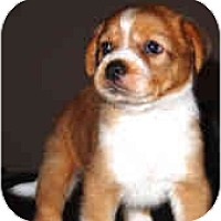 Adopt A Pet :: Jane - Mesa, AZ