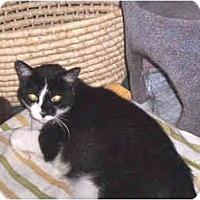 Adopt A Pet :: Kittie - Quincy, MA