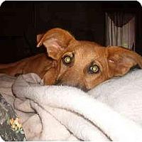 Adopt A Pet :: Austin - North Jackson, OH