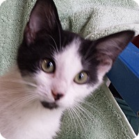 Adopt A Pet :: Laurel - Milford, OH