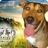 Adopt A Pet :: Eddie - West Hartford, CT