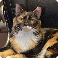 Calico Cat for adoption in Toast, North Carolina - Emily
