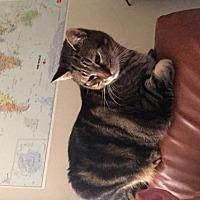 Adopt A Pet :: Roscoe - Baton Rouge, LA
