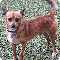 Adopt A Pet :: Tiberon - Bedminster, NJ