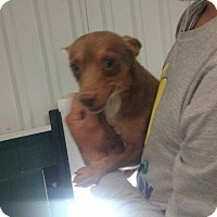 Adopt A Pet :: Tejas - Big Spring, TX