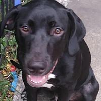Adopt A Pet :: SPLASH - Spring, TX