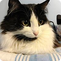 Adopt A Pet :: Peony - Vancouver, BC
