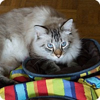 Adopt A Pet :: Boo - Vancouver, BC