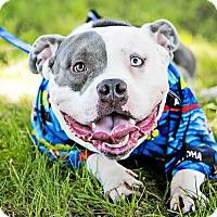Adopt A Pet :: Ranger - San Diego, CA