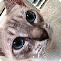 Adopt A Pet :: AURORA - Putnam Hall, FL