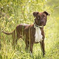 Adopt A Pet :: Aero - Columbia, IL