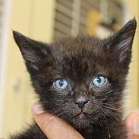 Adopt A Pet :: Lyryc - Park City, UT
