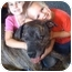 Photo 3 - Boxer/Mastiff Mix Dog for adoption in Los Angeles, California - Tommy
