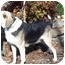 Photo 4 - Hound (Unknown Type) Mix Dog for adoption in Oakland, Arkansas - Hansom